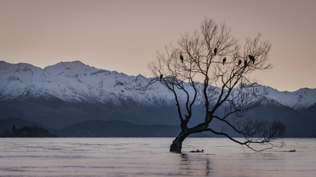 new zealand south island itinerary wanaka lone tree sunset