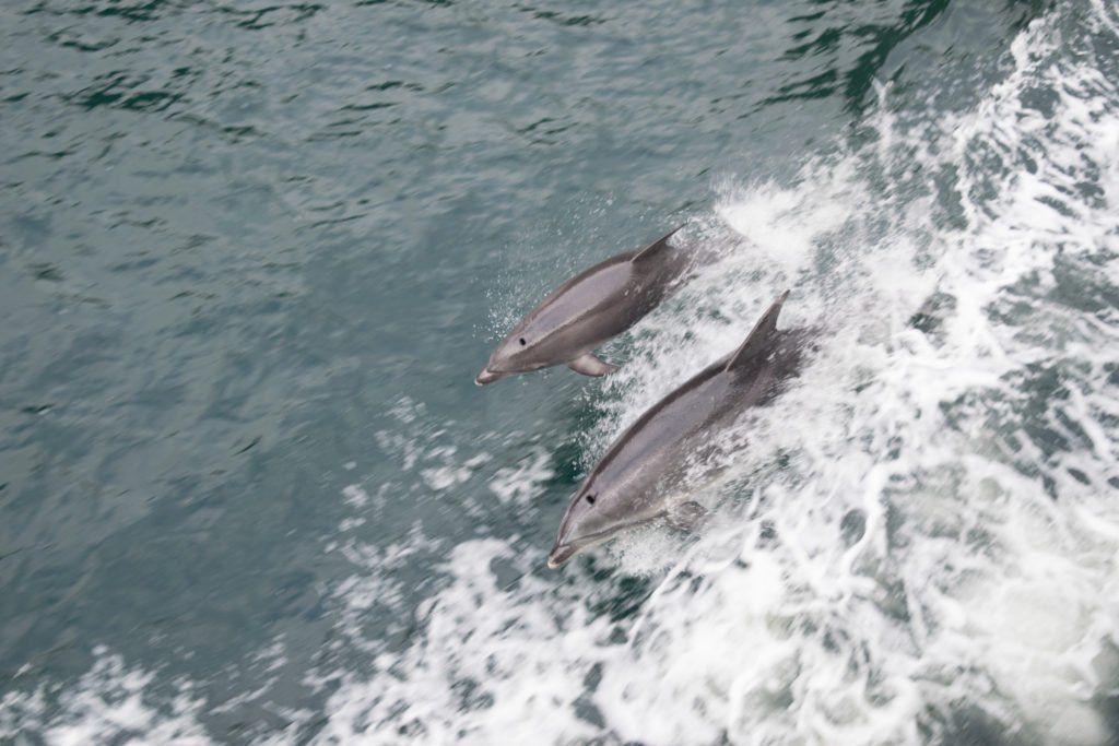 new zealand south island dolphins