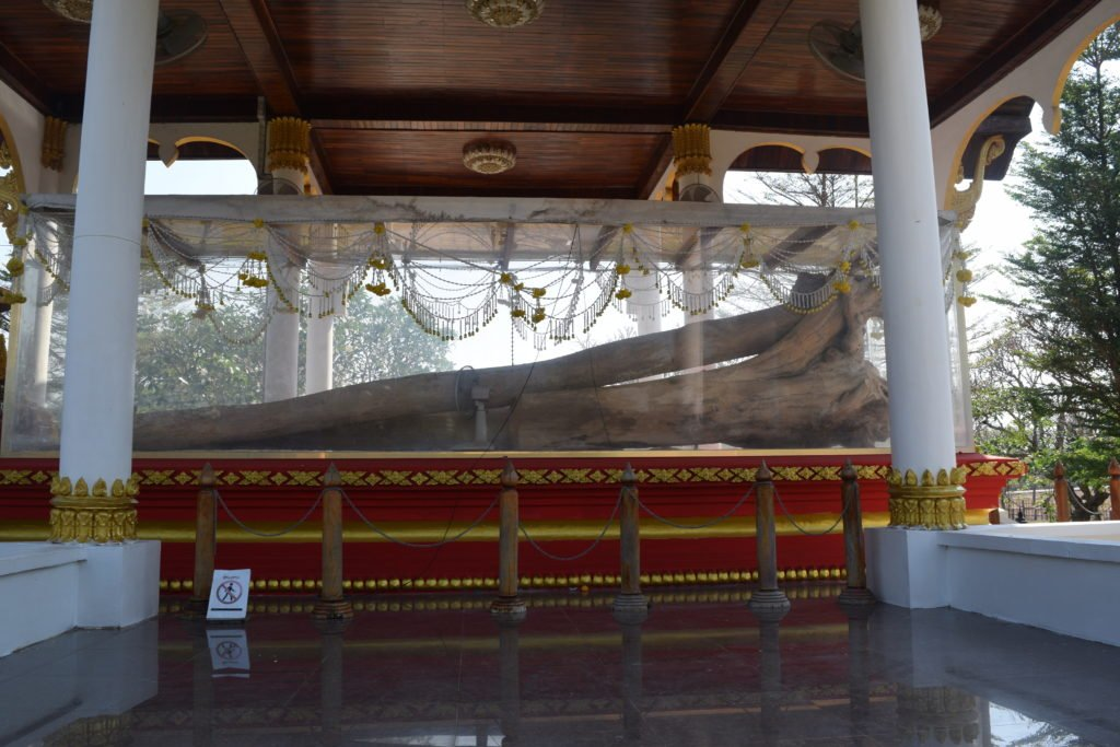 Manikhoth Sacred Tree remains in Manikhot Temple