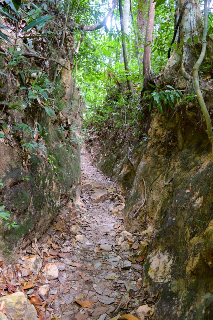 The Carved Hill on The Trail