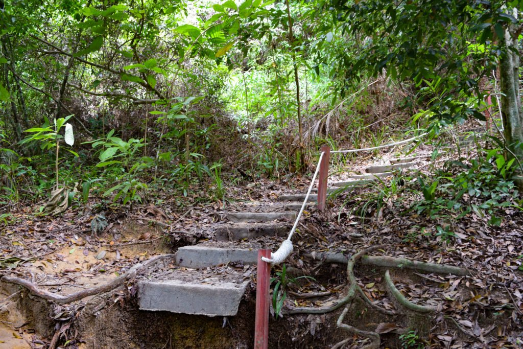 The Starting Trails in Penang National Park