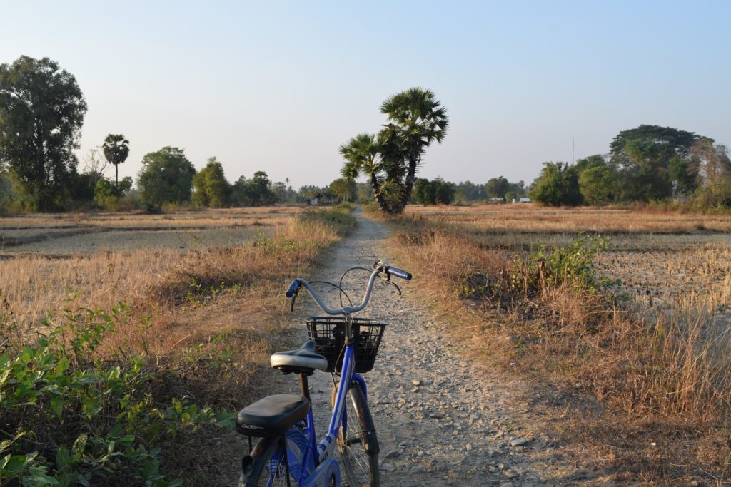 cycling around paddy fields in si phan don