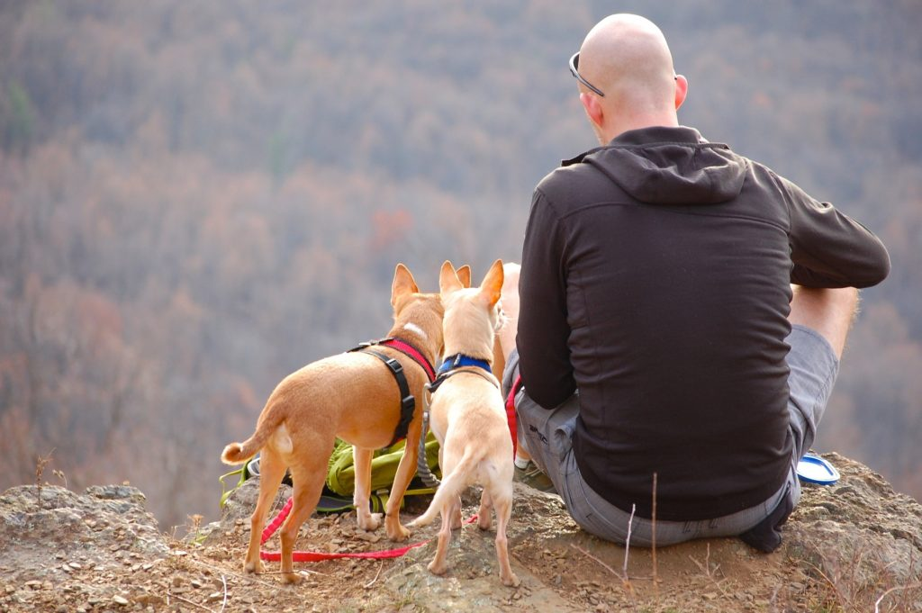 Traveling with Pets HIking