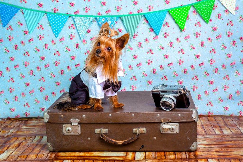 What to Pack for Your Travel with Pets